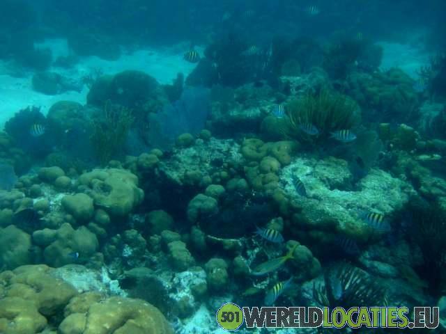 Belize - Northern Cayes koraal rif