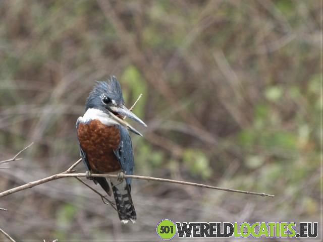 Brazilië - De Pantanal wetlands