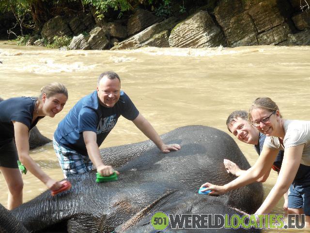 Olifanten wassen op Sumatra