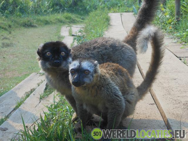 Madagascar - het natuurpark Andasibe