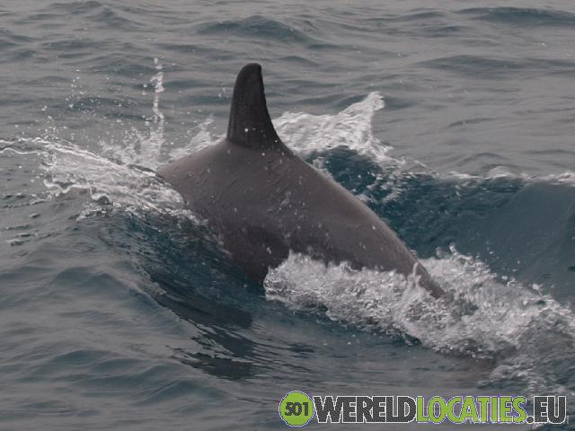 Malediven - Dolfijnen spotten