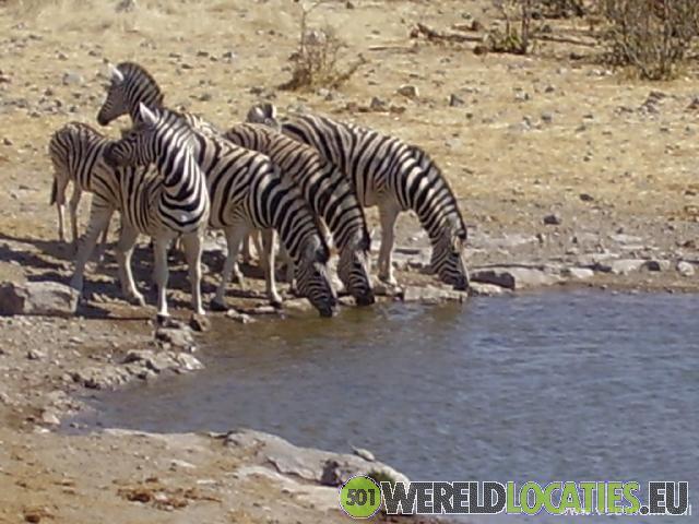 Namibië - Etosha National Park