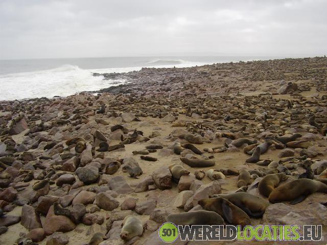 Zeehonden bij Cape Cross