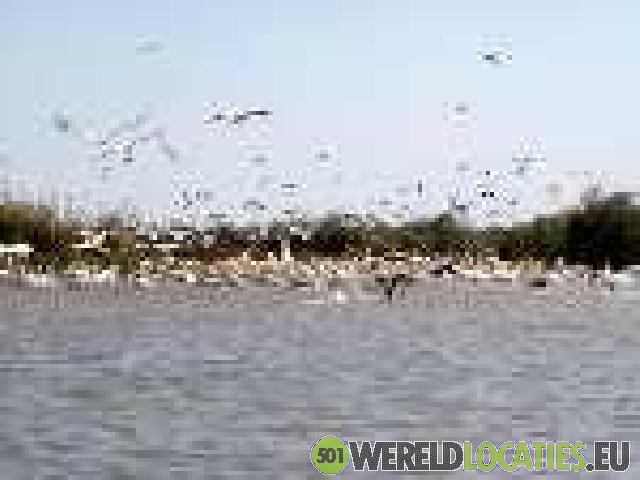 Senegal - Sine-Saloum Delta