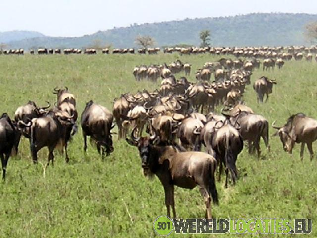 Tanzania - Wilde dieren in de Ngorongoro krater