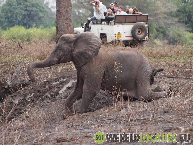 Zimbabwe - Hwange Nationale Park