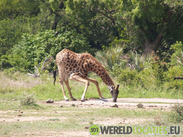 Het Krugerpark